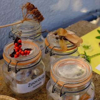 Com si d'una diàspora estractés, avui el@botanicsoller ha viatjat fins al CEIP Ponent d'Inca, on els infants de 2on d'E.P. han tingut l'oportunitat de ficar-se en la pell d'un/a botànic/a investigant el món vegetal del seu hort. T'agradaria fer una activitat educativa amb nosaltres? Contacta'ns i adaptam una activitat al teu centre! #botanicsoller #ceipponent #inca #sóller #educacioambiental #jardíbotànic #culturemallorca #educació #patrimoninatural #mediambient #conservacio #floraBalear #educacióprimària #educaciónambiental #botanica #botanical #plants #natura #hort